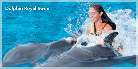 The most popular swimming dolphins program