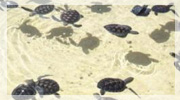 Turtle Farm Cayman