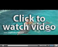 Video Dolphin Swim Adventure