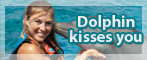Dolphin Kiss You